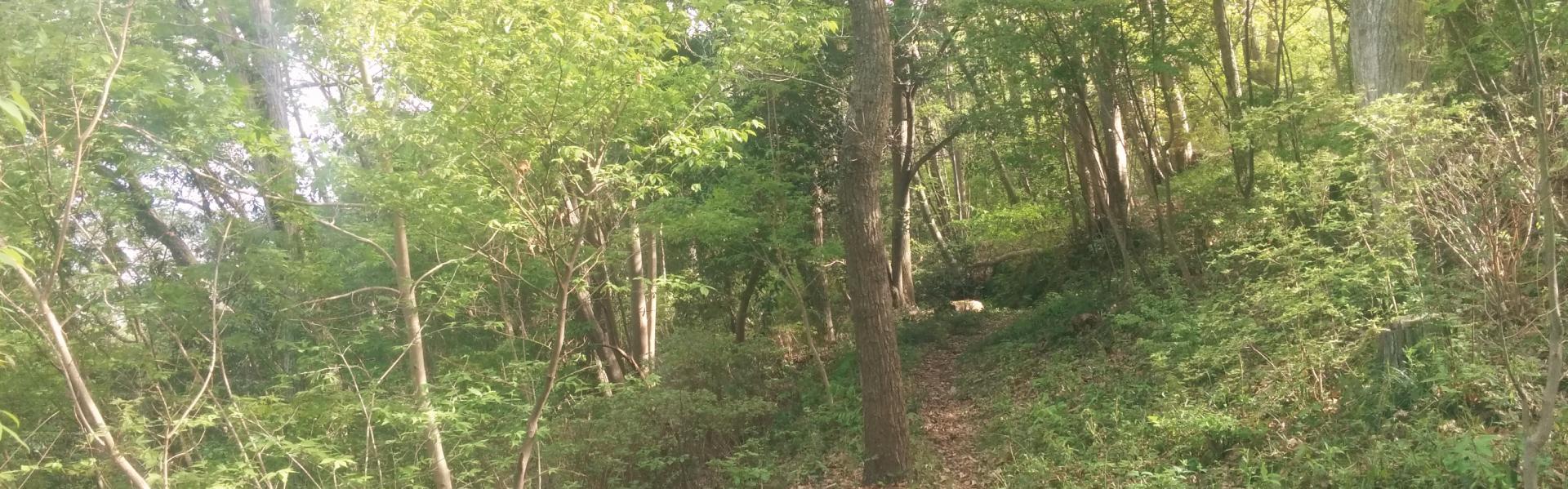 ようこそ青木平の森へ
